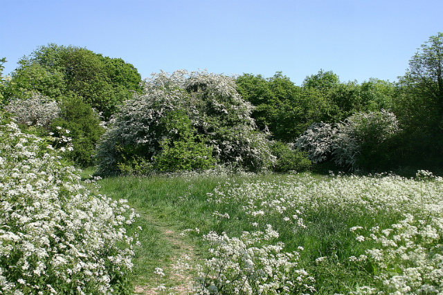MAY IN RAILWAY FIELDS