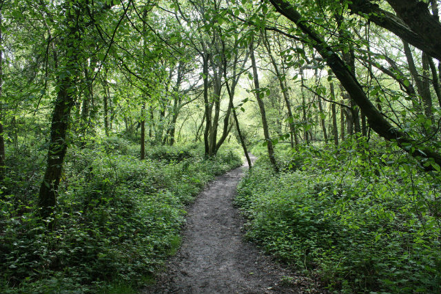 PATH IN SPRING WOODS