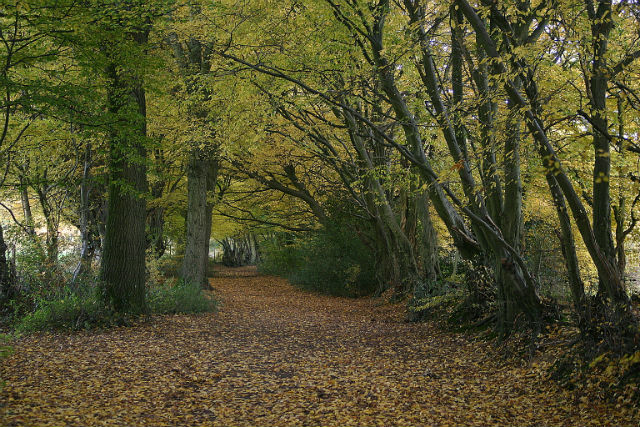 AUTUMN BRIDLEWAY E OF KINGSWAY