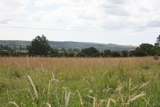 BAT FARM GRASS MEADOW